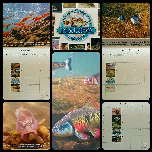 calendar2016sm.jpg